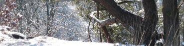 cropped-wintertheetas_4_2.jpg