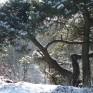 wintertheetas_4_2
