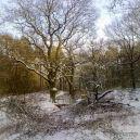 winter-op-de-veluwe